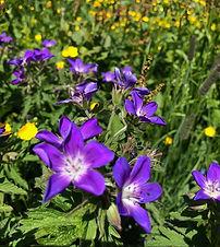 Blumenwiese im Val Tujetsch