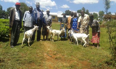Goat-1.jpg