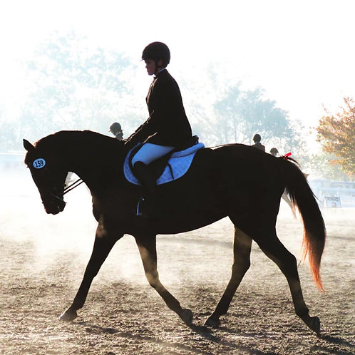 Dressage Differently Winter Series