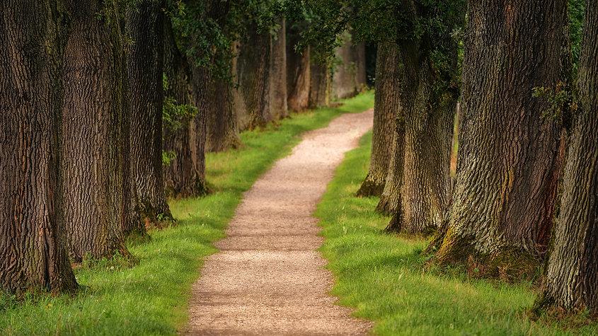 tree-3092026_1920.jpg