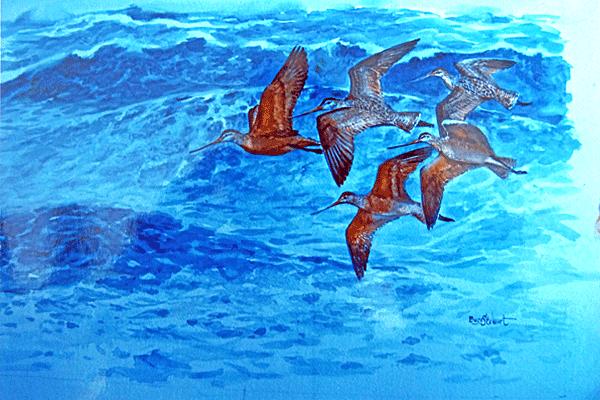 Five-Seabirds-Flying