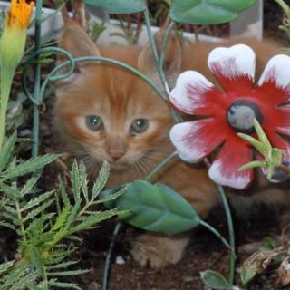 Cats-Littlequinn-3.jpg