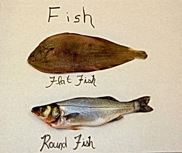 Flat fish vs. round fish