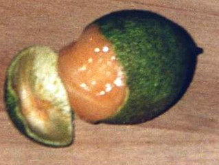 Spanish Lime