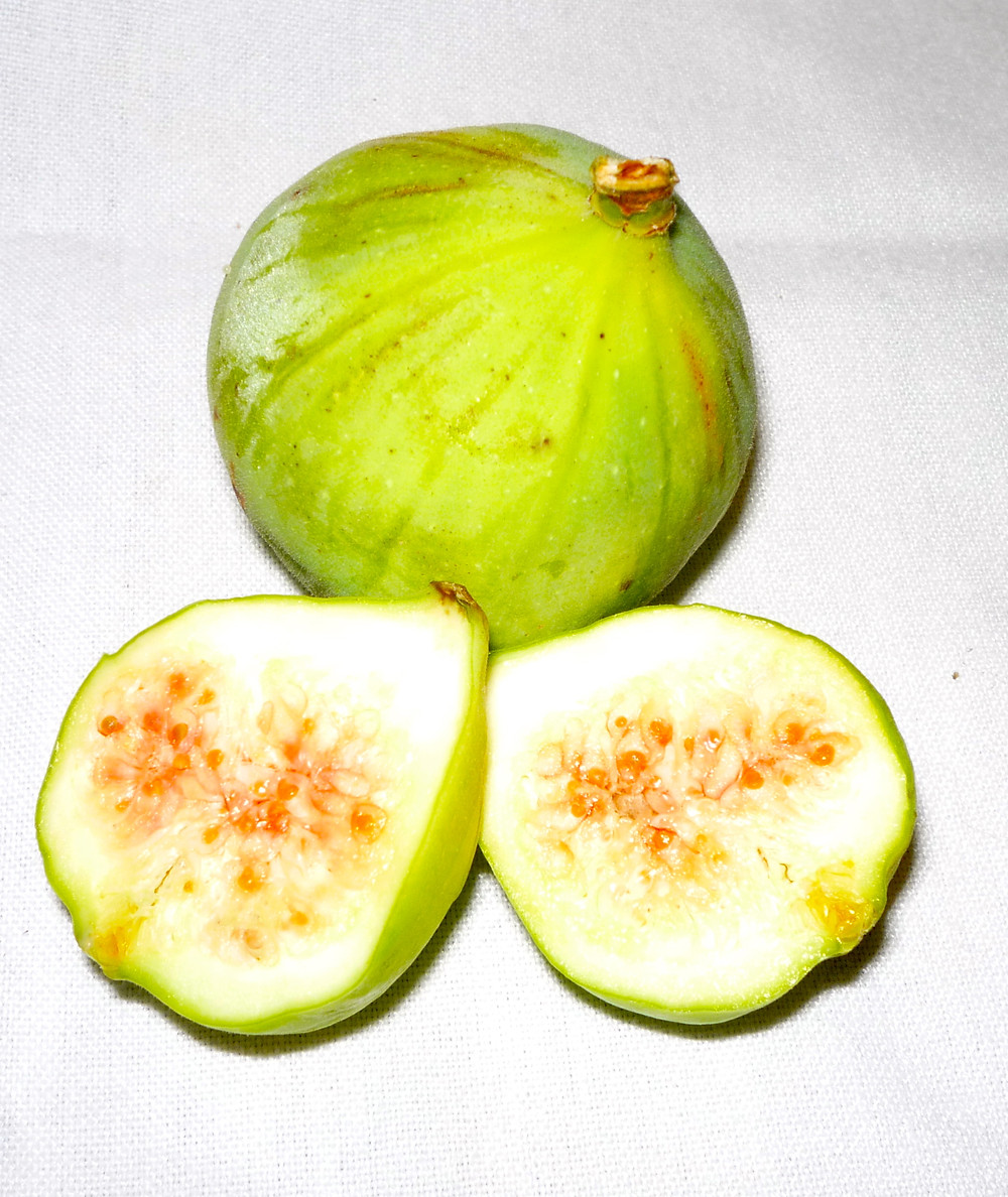 FIG, CALIMYRNA.JPG