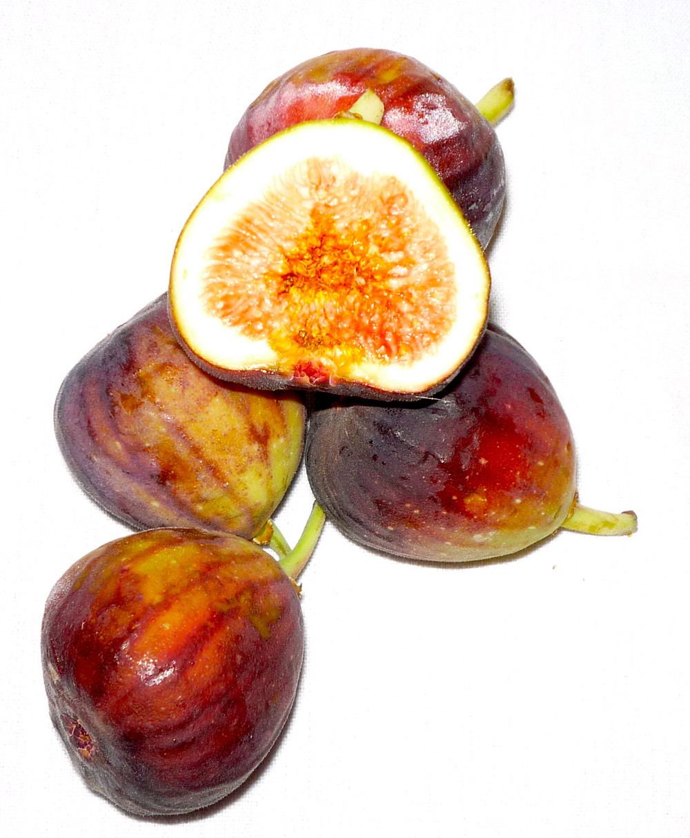 FIGS, BROWN TURKISH.JPG