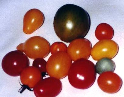 TOMATO, CHERRY AND PLUM, ASSORTED.jpg