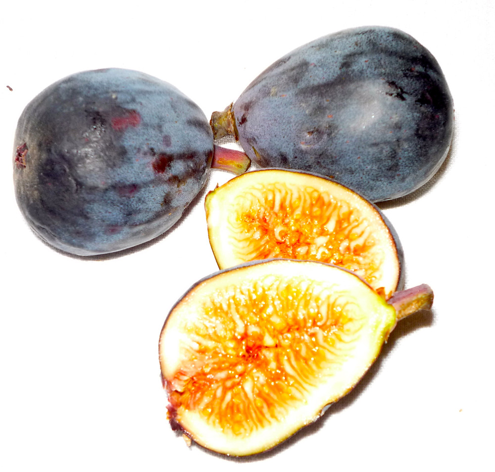 FIG, BLACK MISSION.JPG