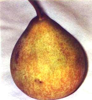 PEAR, FRENCH BUTTER.jpg