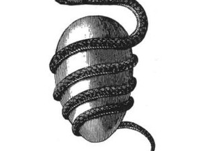Cosmic Egg - Alchemy & Symbolism