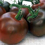 Black Prince tomatoes