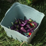 Chinese five-colour peppers (hot!)