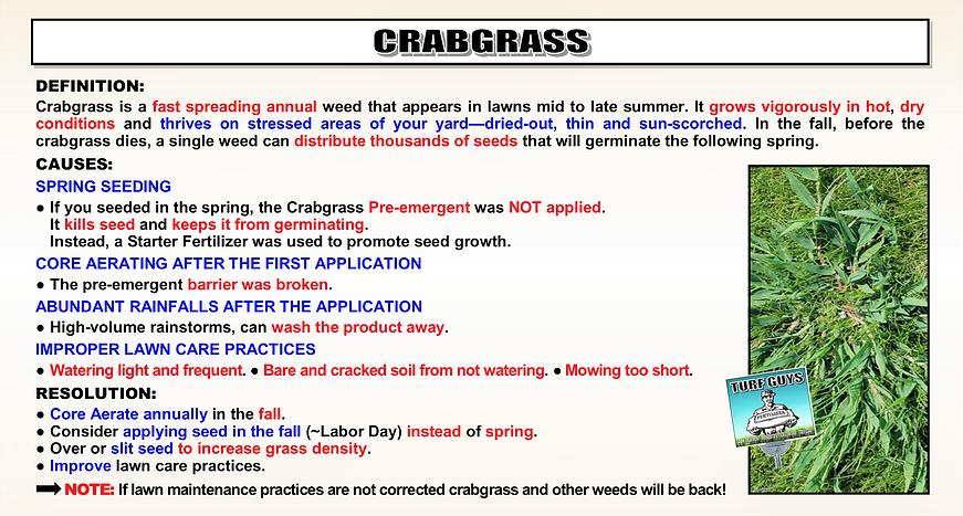 CRABGRASS FLIER