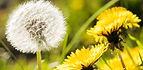 Lawn Care Service - Fertilizer Treatment - Weed Control - Tree & Shrub Care │ Turf Guys IL