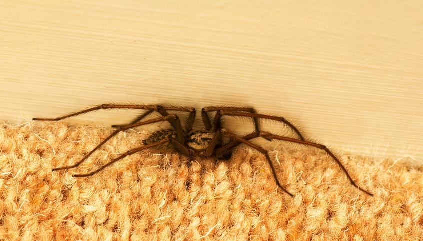 Bug Guy - Spider