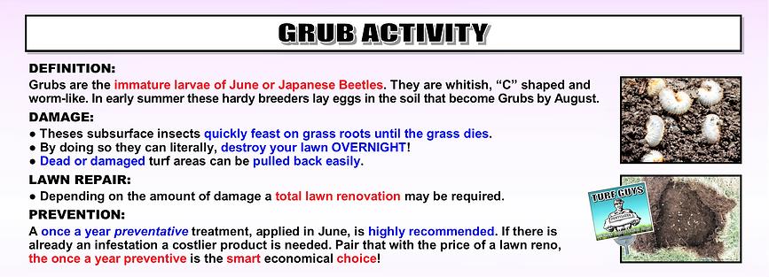 GRUB ACTIVITY OR DAMAGE