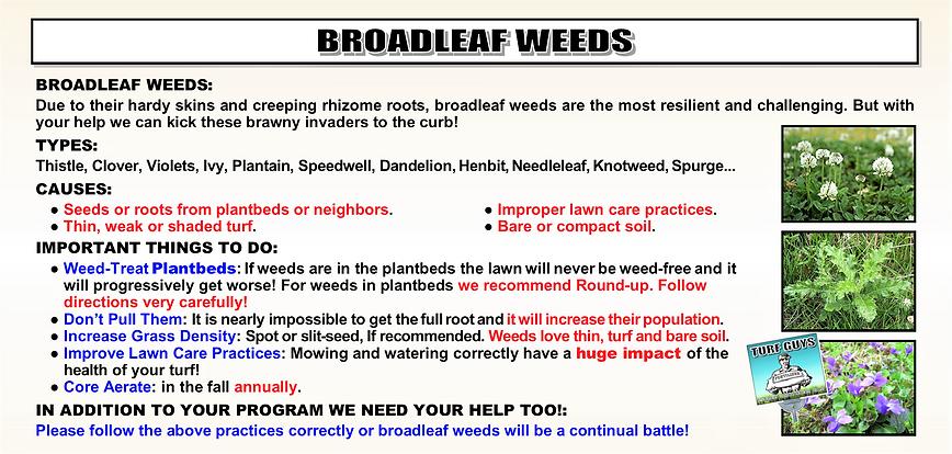 BROADLEAF WEEDS FLIER