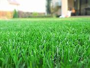Turf Guys Lawn Care Program - Healthy Tu