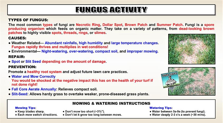 FUNGAL DISEASE