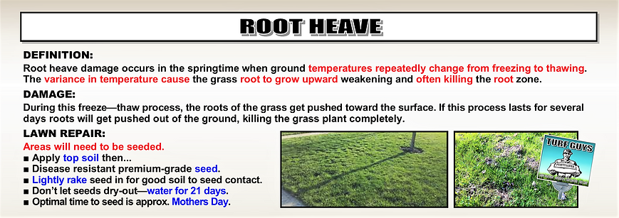 ROOT HEAVE