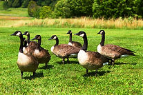 We are industry leaders in lawn care service, specializing in weed control, fertilization, tree care, bug sprays, goose control.  Serving Lake Zurich, Buffalo Grove, Long Grove, Mundelein, Vernon Hills, Libertyville, Crystal Lake, Gurnee, Hawthorn Woods…