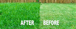Turf Guy Core Aeration - Before & After