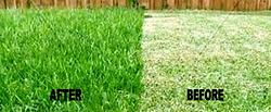We are industry leaders in lawn care service, specializing in weed control, fertilization, tree care, bug sprays.  Serving Lake Zurich, Buffalo Grove, Long Grove, Mundelein, Vernon Hills, Barrington, Wauconda, Crystal Lake, Gurnee, Hawthorn Woods…