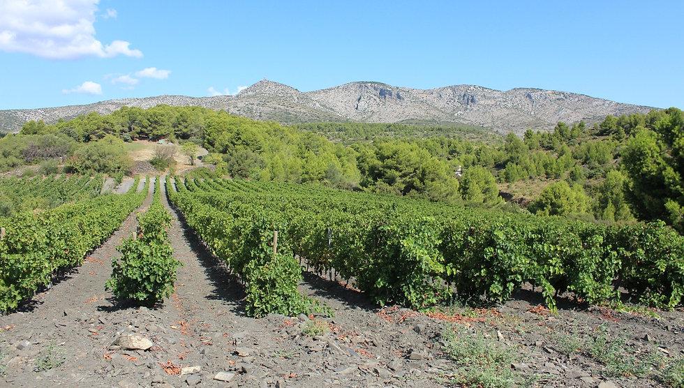 Cases-de-Pêne, vignes, terroir, roussillon, vendanges manuelles, côtes de roussillon villages, vinde pays des côtes catalanes