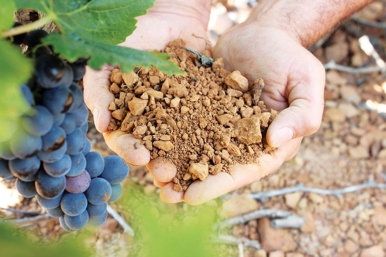 Photo de la terre argilo-calcaire présente dans les vignes du domaine depeyre