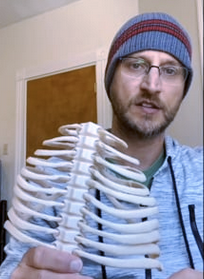 Intro to respiration and the ribcage