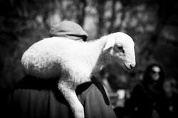 agneau et berger