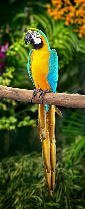 Vivariums-birds guide-Macaw | tropical-hobbies