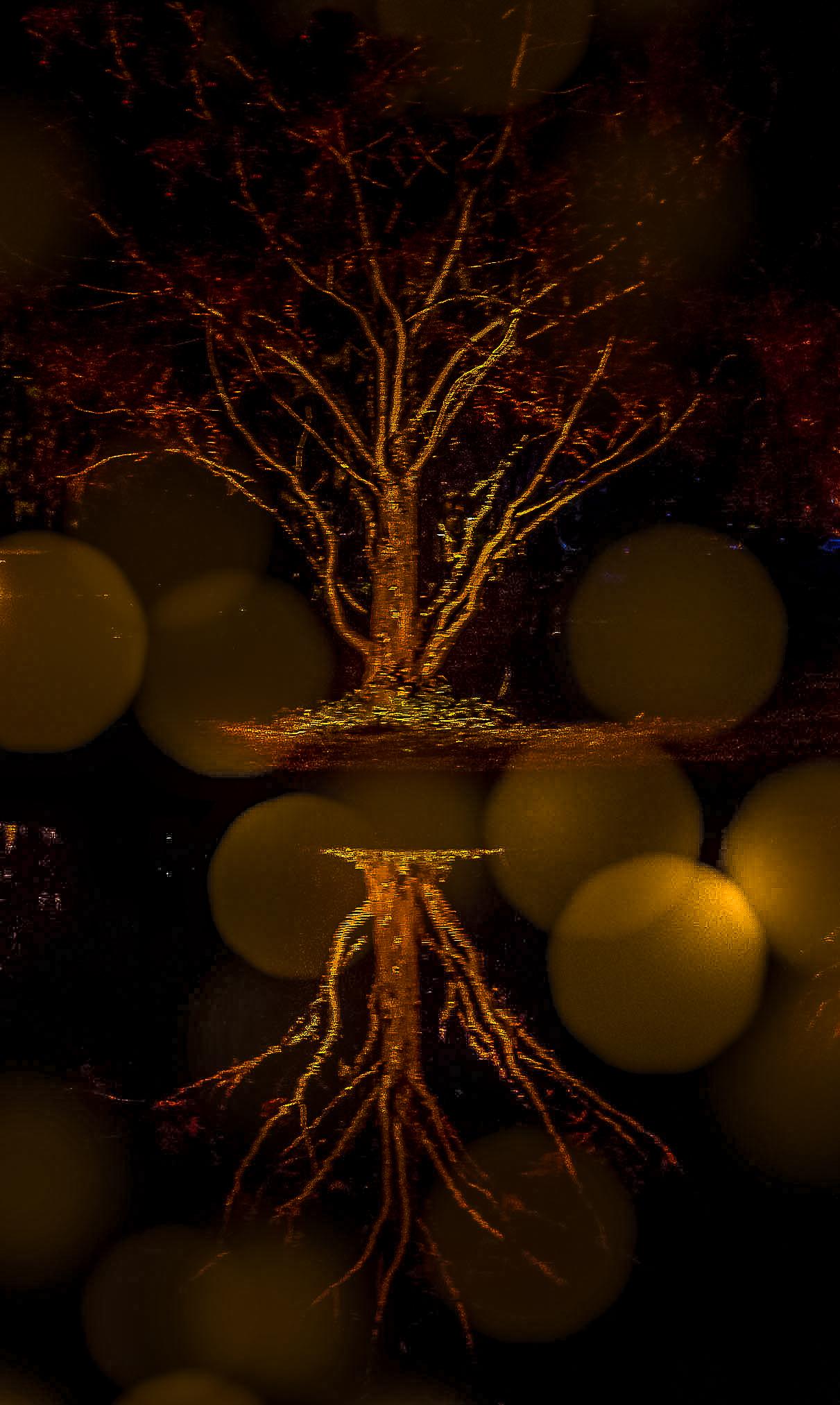 58090F - Brookgreen - Holiday Lights