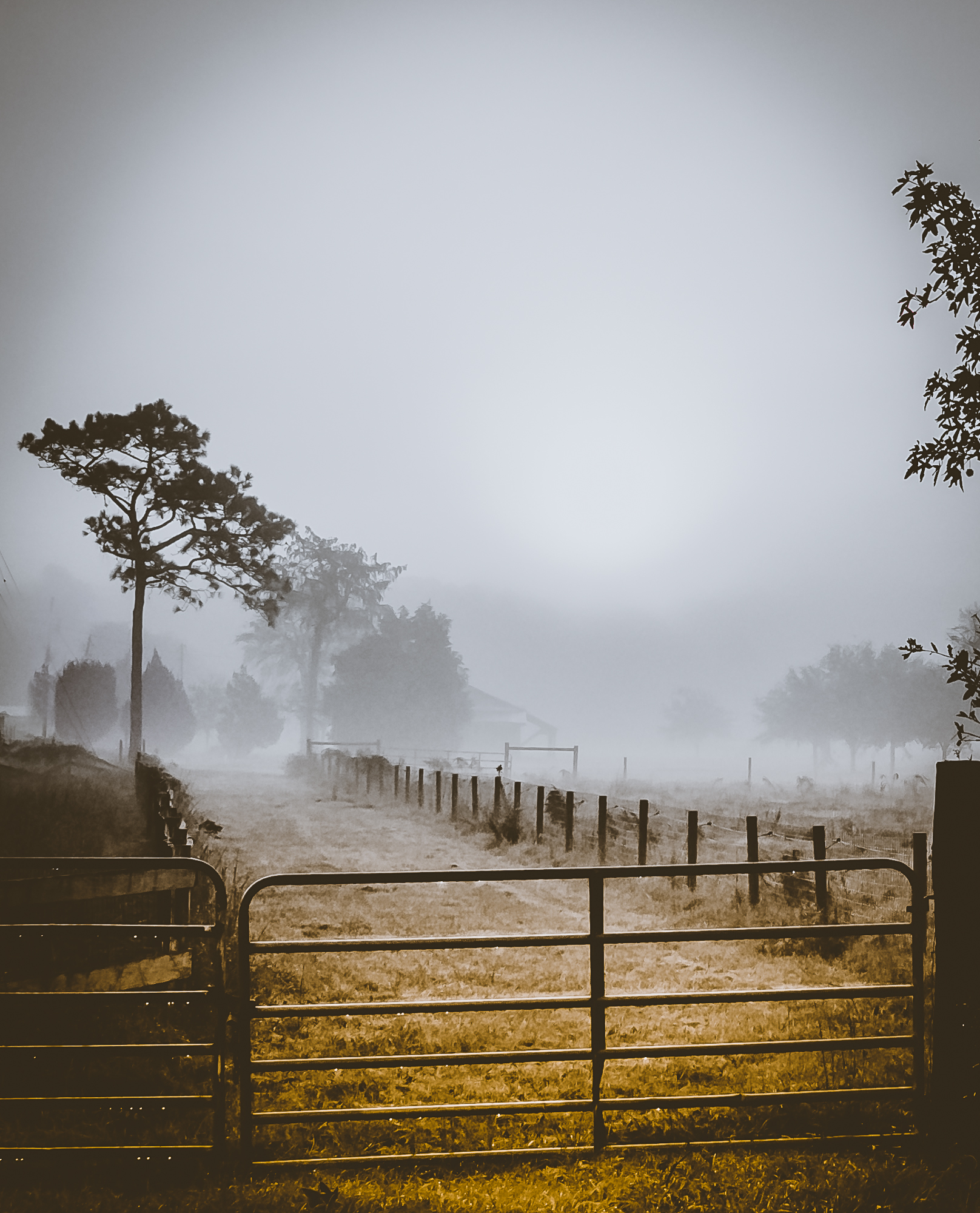 58075A - Foggy morning on the Farm