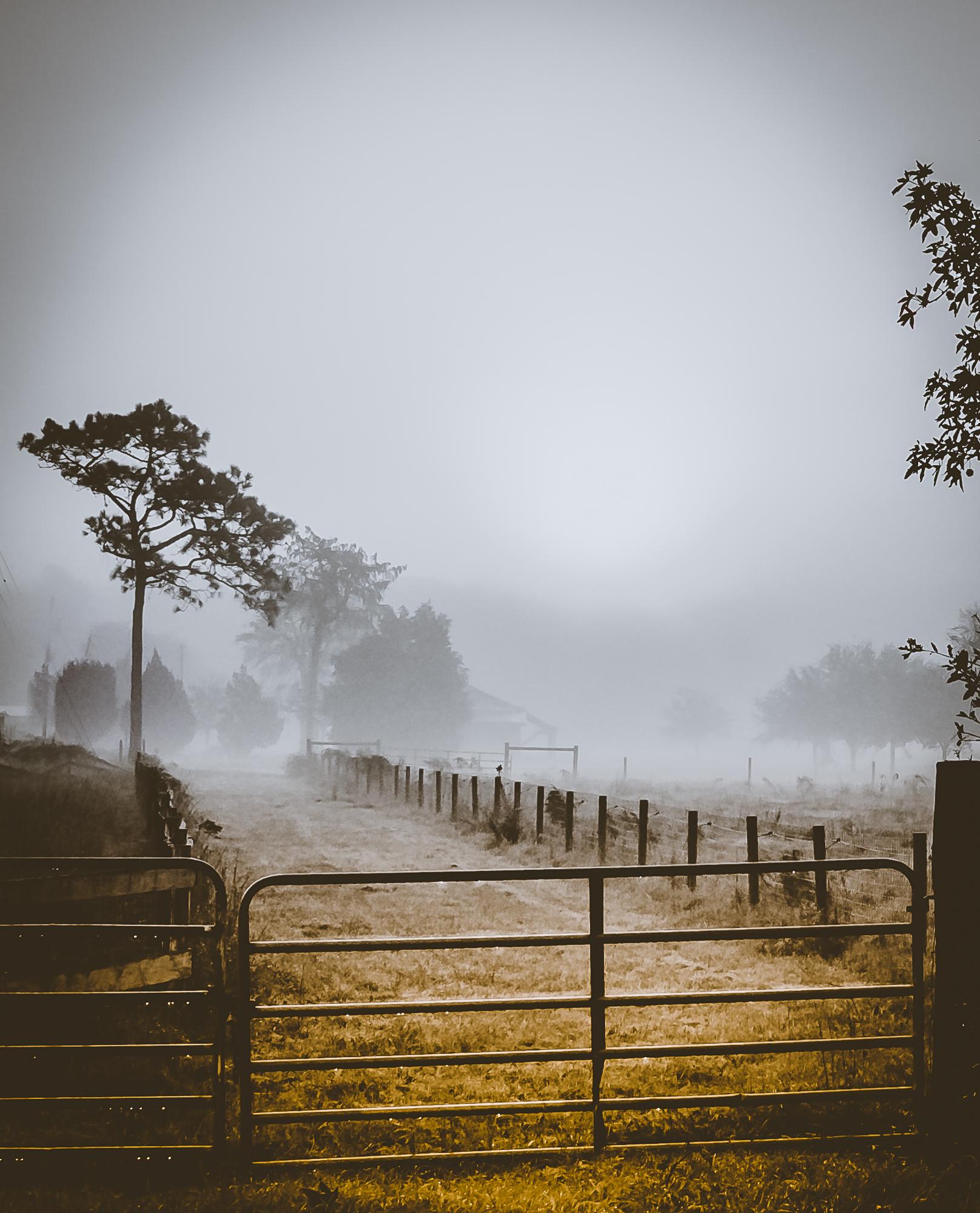 58075A - Foggy morning on the Farm