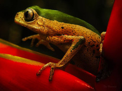 Spotting frogs during a night walk