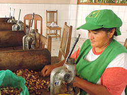 Visiting the Brazil nut factory
