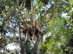 Our 25meter tree climbing platform