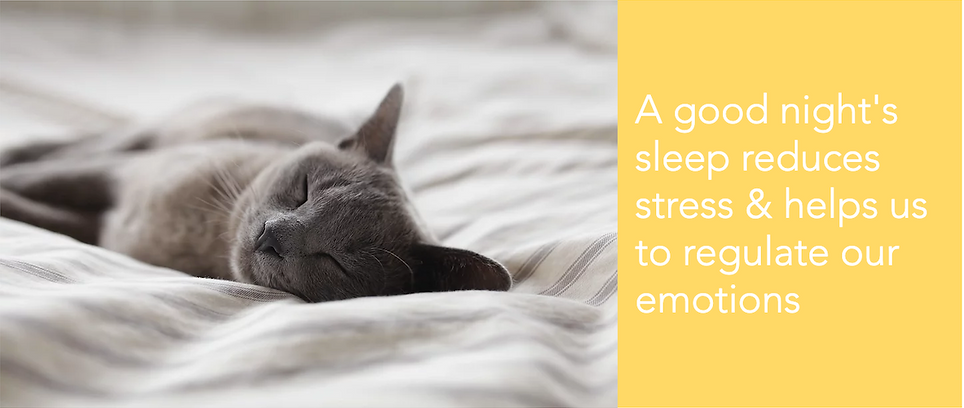 cat_sleeping_benefits_of_a_good_night's_