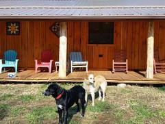 Porch dogs.jpg