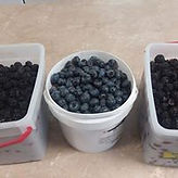 Blueberries basket.jpg