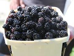 bberries.jpg