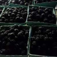 lackberry pints.jpg