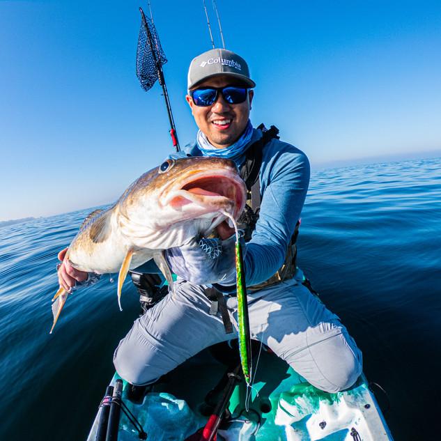 Pacific cod