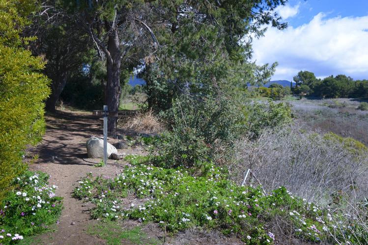 21_Trail.jpg