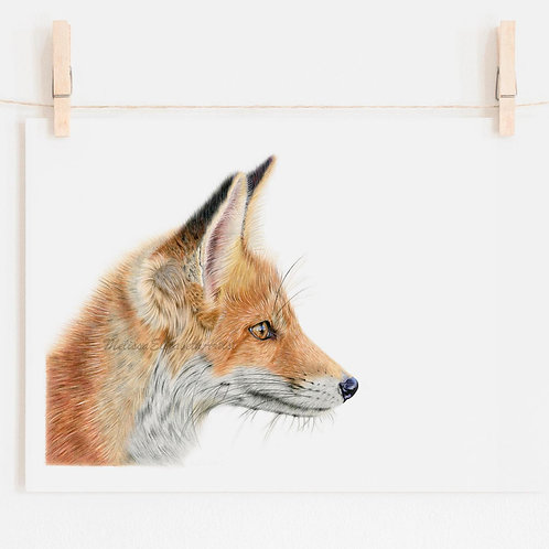 'Curious Mr Fox' Open Edition Print
