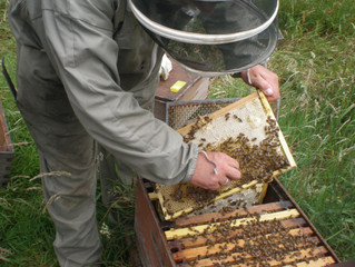 A year in the life of a Scottish Beekeeper