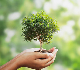 vecteezy_hand-holding-a-small-tree-on-bl