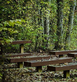 benches_trees_forest_green_brown_mysteri