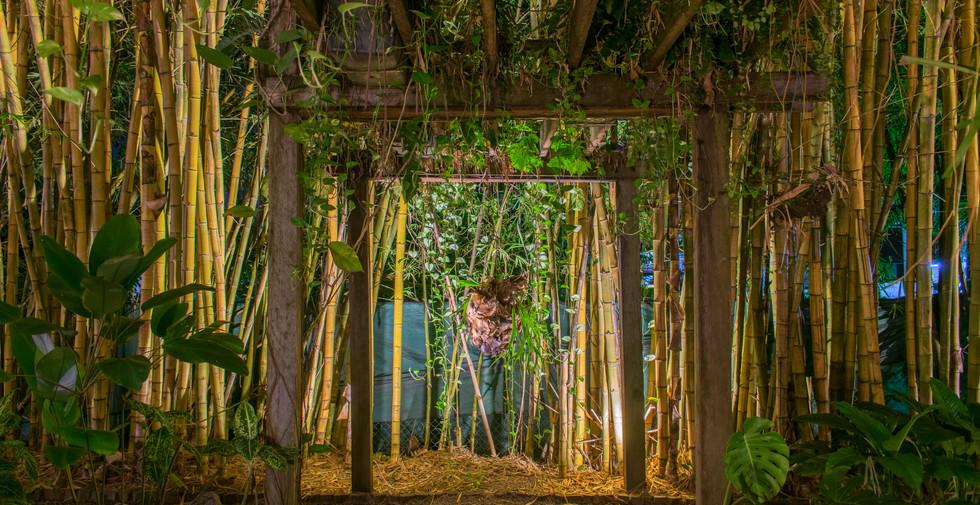 Bamboo Garden_Jacana